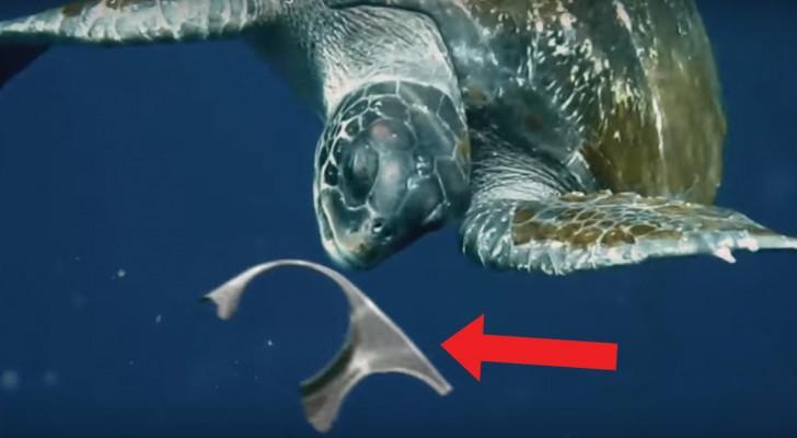 Een zeeschildpad eet afval dat in zee terecht is gekomen, maar dit verhaal eindigt anders dan je zou denken...