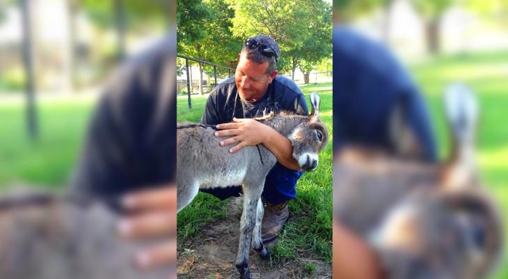Questo cucciolo di asino ha 8 ore di vita... Guardate la sua coda quando viene abbracciato!