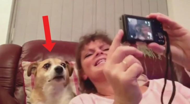 Deze vrouw wil een selfie maken met haar hond: de reactie van de hond is spectaculair!