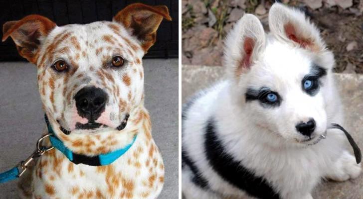 Voici certans chiens que Mère Nature a voulu transformer en œuvres d'art