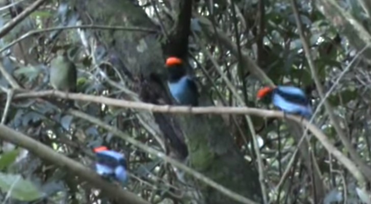 Three birds perch on a branch  --- After a few seconds you will not believe your eyes!