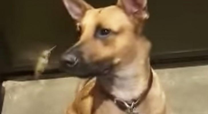 Un perro salva la vida a un colibri...la relacion que tienen hoy es casi irreal!