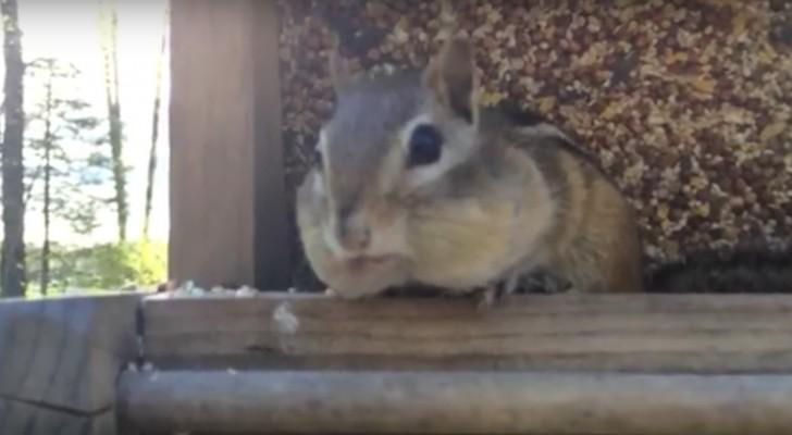 Deze eekhoorn is op heterdaad betrapt... kijk wat er allemaal uit zijn mond valt!