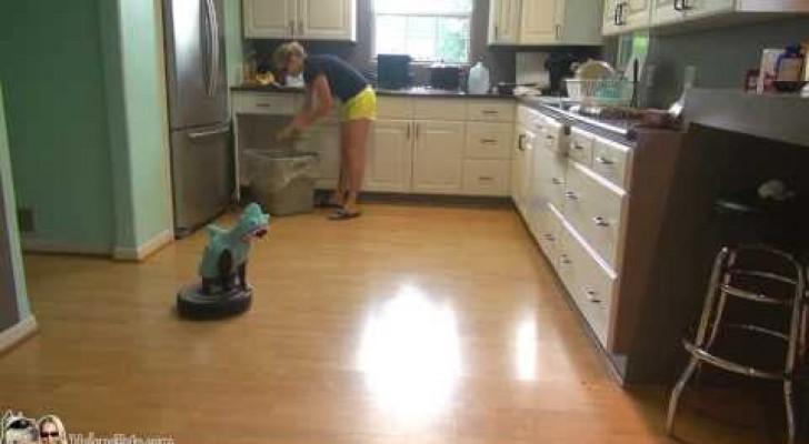 Un gatto si traveste da squalo e si dà alle pulizie... Vi sembra folle? È tutta realtà!