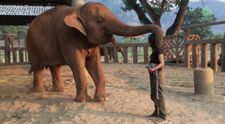 Ze benadert een olifant en begint te zingen: dit is hoe het dier hier op reageert... Wow!