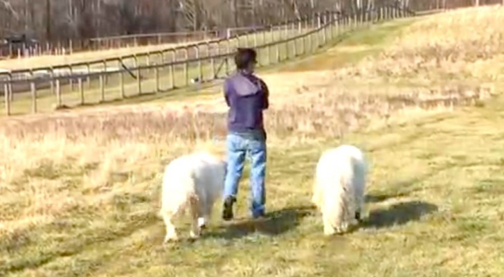 She starts walking with just her two dogs --- but wait and see who joins them!