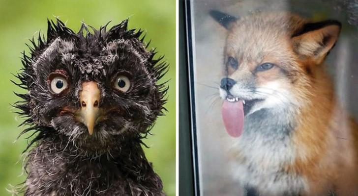 25 photos impitoyables que les amoureux des animaux trouveront tout de même ADORABLES