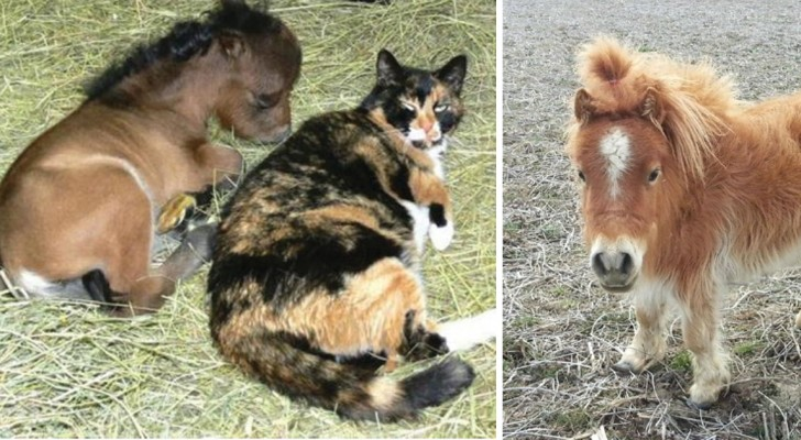 14 chevaux en miniature : oui, ils existent vraiment!