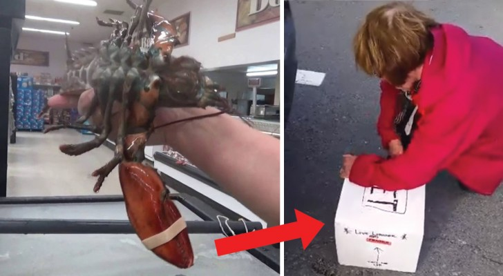 She buys a live grocery store lobster --- what she did next was totally unexpected!