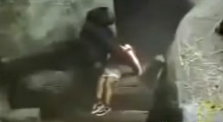 En 1996 un niño cae en el recinto de un zoologico: la reaccion del gorila dejo a todos asombrados
