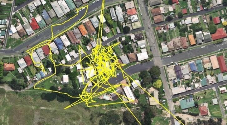 Een Kat Krijgt Een GPS-Apparaat Om En Wordt Vrijgelaten. De Resultaten Die Ze Terugkrijgen Overtreft De Verwachtingen