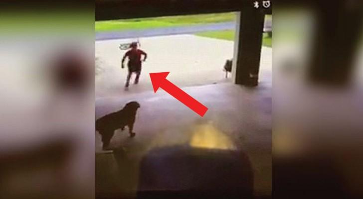 Un garçon s'arrête devant le garage: ce que filme la caméra n'a pas de prix