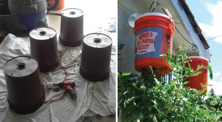 wie man zu hause tomaten kopf ber z chtet perfekt f r einen balkon. Black Bedroom Furniture Sets. Home Design Ideas