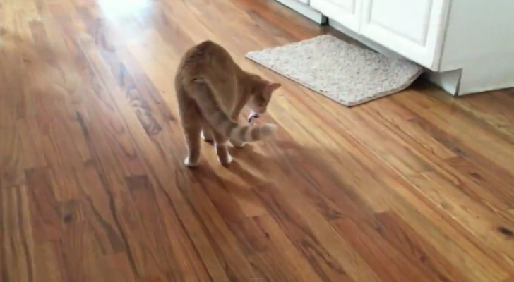 This looks like a normal cat playing --- but then you notice an amazing detail ...