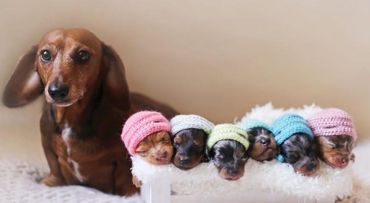 Una madre orgogliosa posa con i suoi cuccioli per il servizio più adorabile che esista