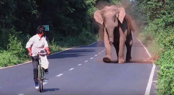 Mama olifant blokkeert het verkeer voor een aantal minuten. Korte tijd later wordt duidelijk waarom...