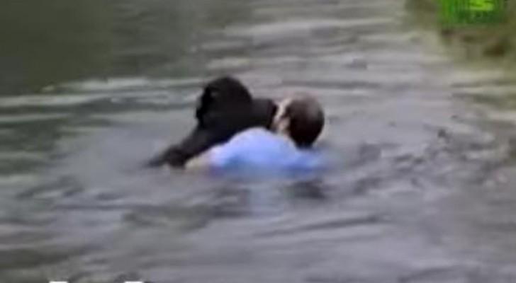 Hij ziet dat een aap op het punt staat om te verdrinken in een dierentuin... zijn reactie doet iedereen versteld staan!