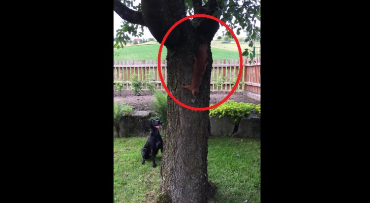 Hij vindt een eekhoorn in de boom: wat er de komende 60 seconden gebeurt, zal je in lachen doen uitbarsten!