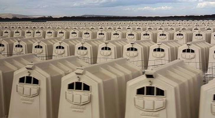 Toute la cruauté de l'élevage industriel résumée en une seule photographie terrifiante