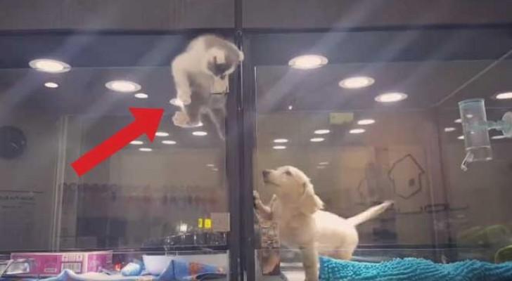 Het lijkt erop dat een kitten uit zijn box ontsnapt ... maar zijn volgende stap is totaal onverwacht