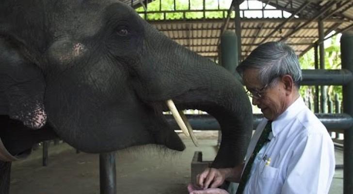 Si muove come un comune elefante, ma guardate la sua zampa anteriore...