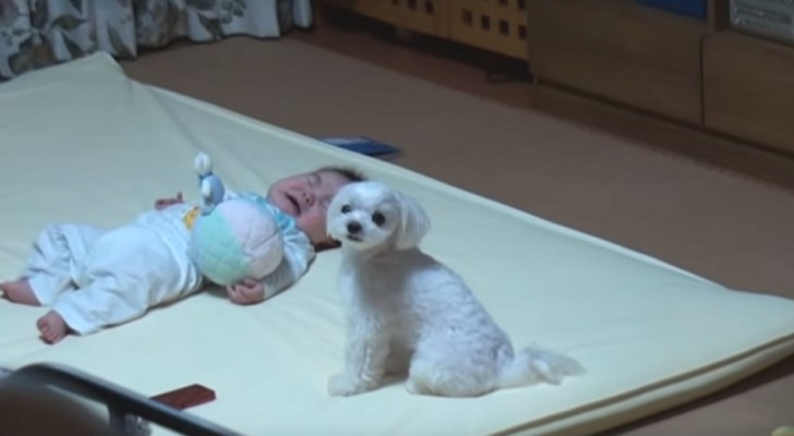 Il bambino scoppia in lacrime ma il cagnolino riesce a farlo smettere: guardate come!