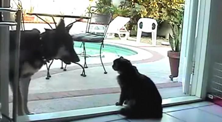 Hund, du kommst hier nicht rein!