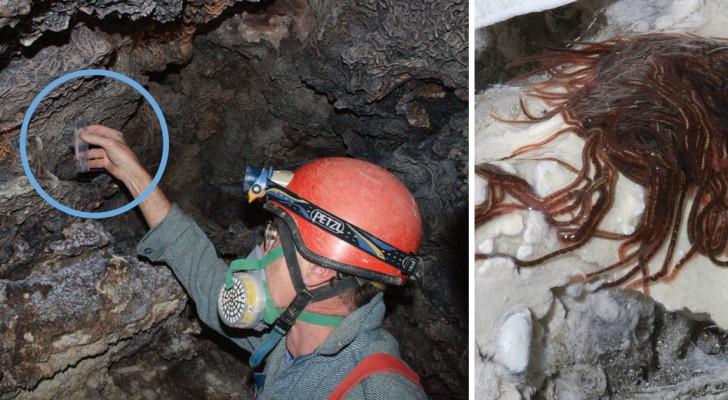 Si calano in una grotta altamente tossica, ma li attende una bellissima scoperta