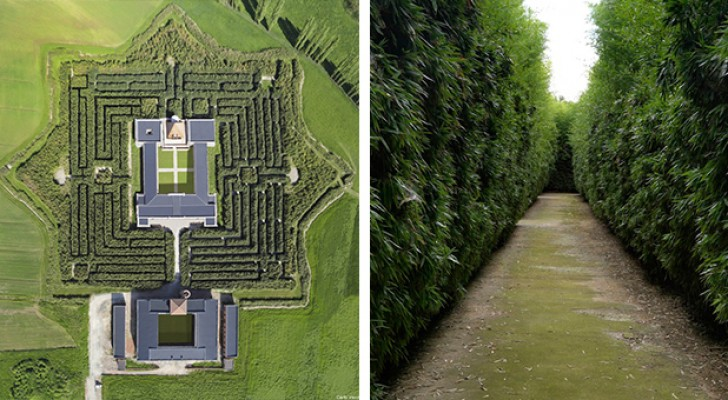 Il labirinto più grande al mondo? Si trova in Italia e comprende oltre 200.000 piante