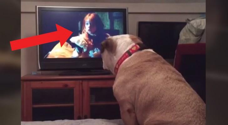 Deze buldog is een horrorfilm aan het kijken op tv als er for Tuinprogramma op tv