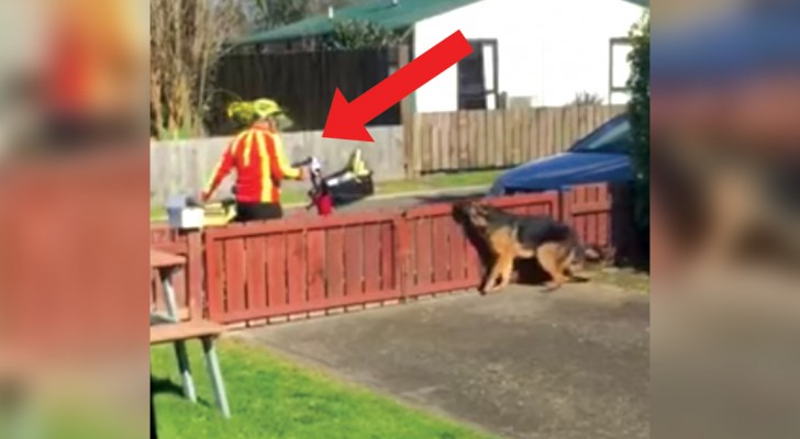 Filma di nascosto l'arrivo del postino: ecco cosa fa ogni giorno con il cane... Adorabile!