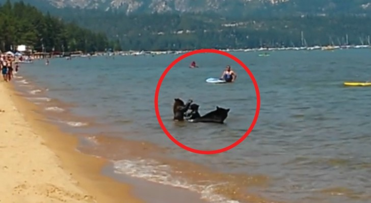 Bathers at a Lake Tahoe beach  see something they will never forget!