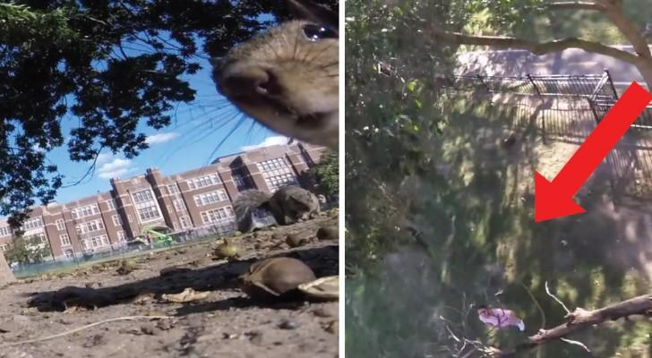 Una videocamera nelle 'mani' di uno scoiattolo: le riprese dalla prospettiva davvero unica!