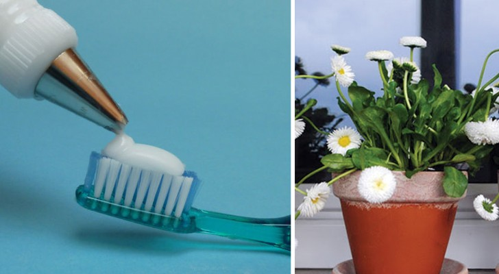 Ein natürlicher Bestandteil anstatt chemischer Produkte: Entdeckt 16 Möglichkeiten Wasserstoffperoxid zu verwenden
