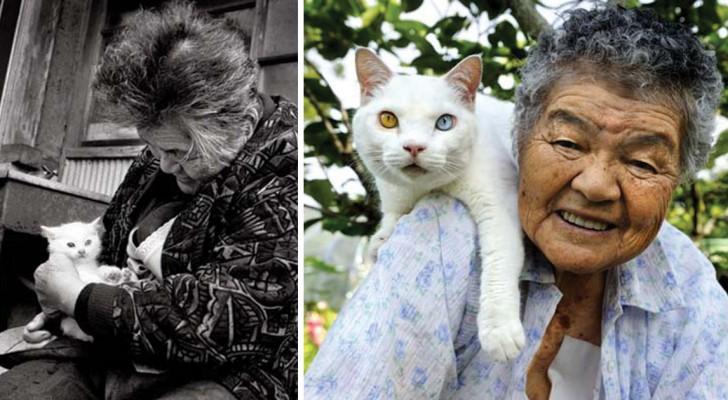 Un'anziana trova un gatto in fin di vita: ecco le immagini da sogno scattate dalla nipote