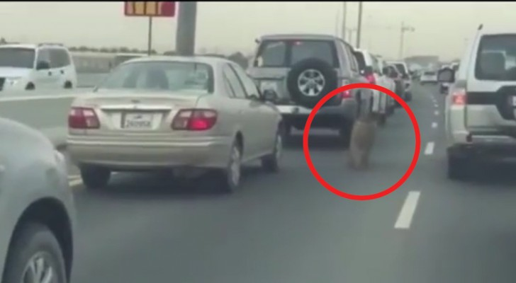 Estes motoristas assistem a uma cena fora do comum... e muito triste!