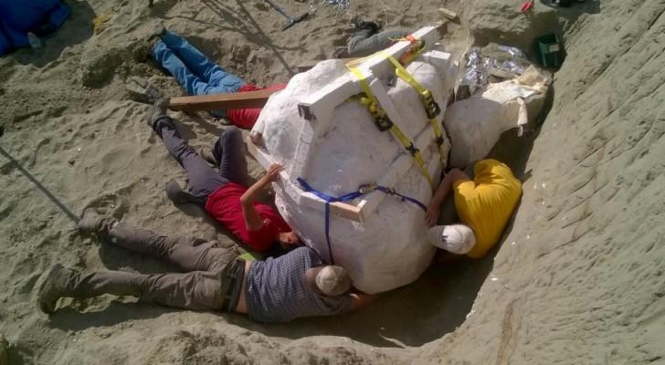 Retrouvé un exemplaire «intact» de T-rex: son crâne donne une idée de ses dimensions effrayantes!