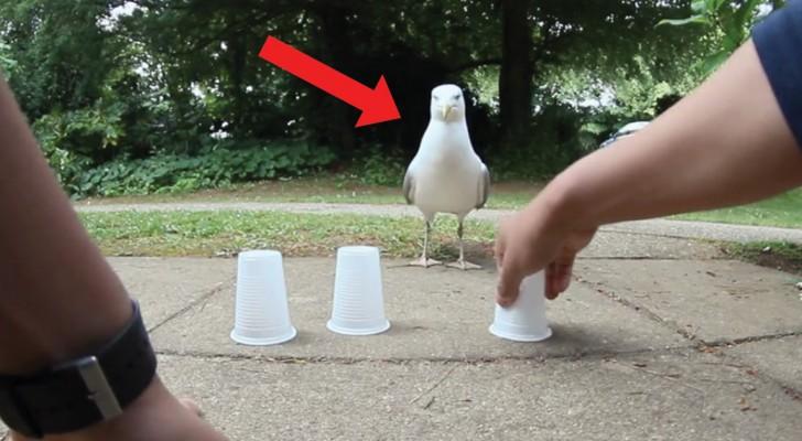 Desafia a la gaviota con el juego de los 3 vasos: tengan atencion a sus movimientos...