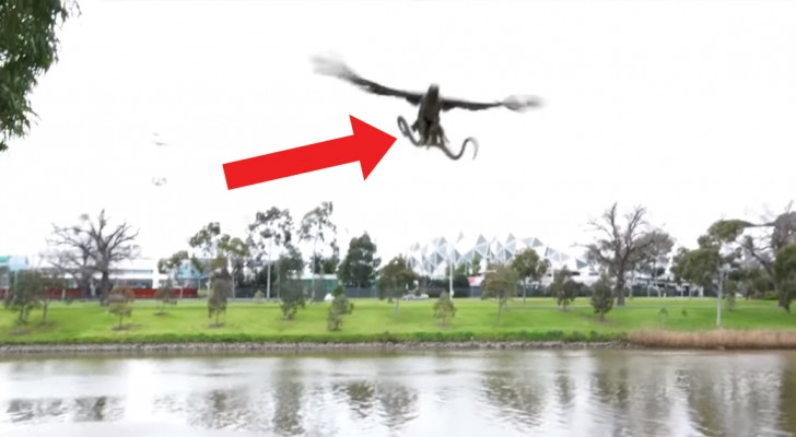 They film a hawk capturing a snake --- then the unexpected happens!