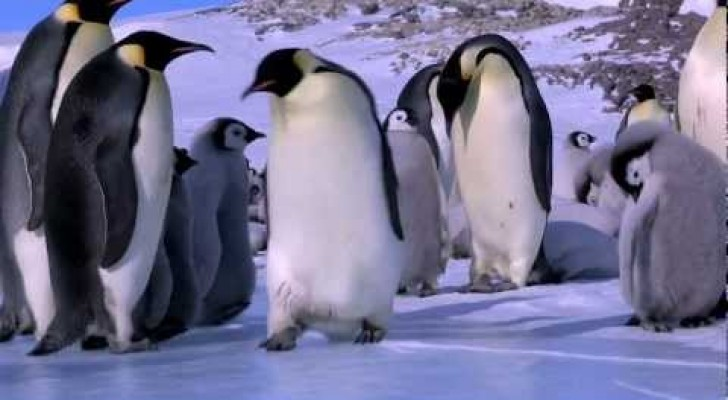 Pinguins que escorregam